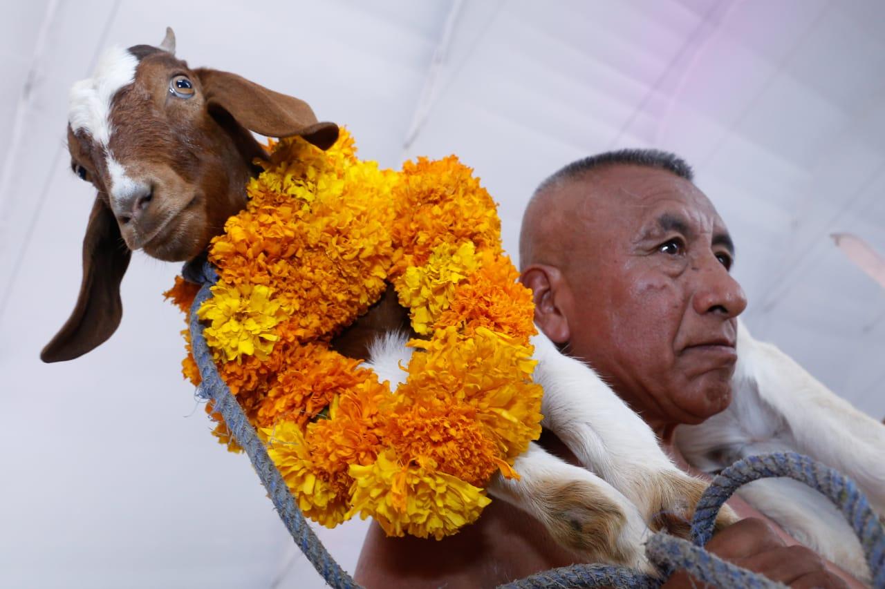 Certificará gobierno autenticidad de carne de mole de caderas: Barbosa